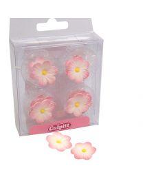 Culpitt licht Roze/wit margrietjes 12 stuks